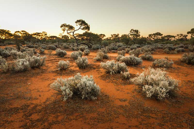 Federal Government chooses Kimba farm Napandee on the Eyre Peninsula for nuclear dump