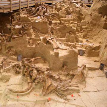 Dozens of mammoth bones found at Mexico airport