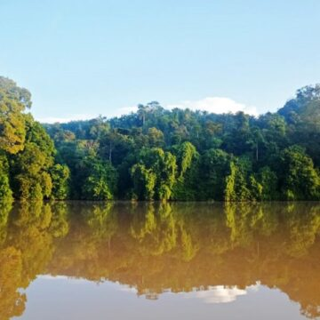 Queensland hands back Daintree rainforest back to Aboriginal owners